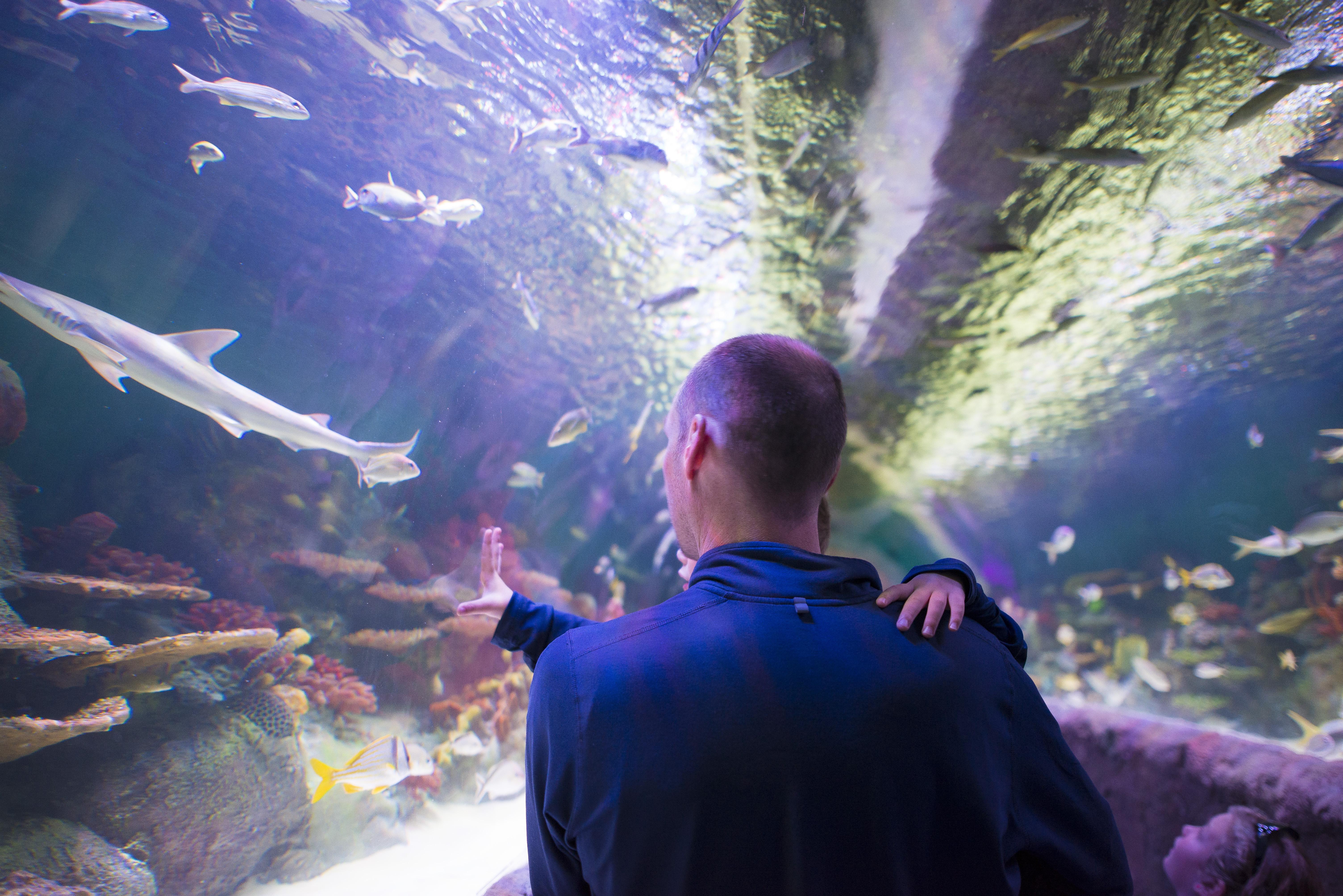 Via Aquarium