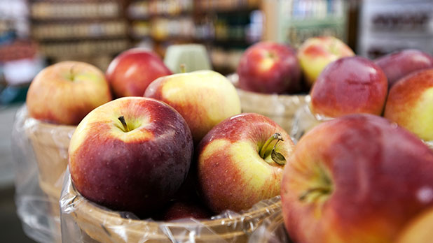 28th Annual Apple Festival at Goold Orchards