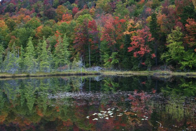 Spectacular fall color in the Old Forge area!