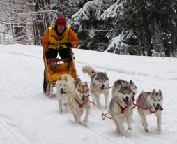 Tug Hill Dog Sledding