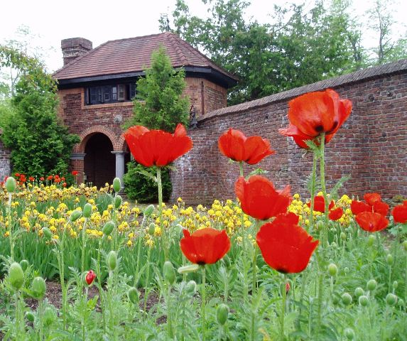 Oriental poppies and bearded irises accent the King's Garden teahouse located at Fort Ticonderoga.