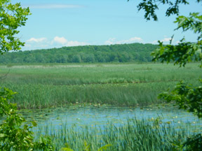 Deer Creek Marsh, new brochure now available