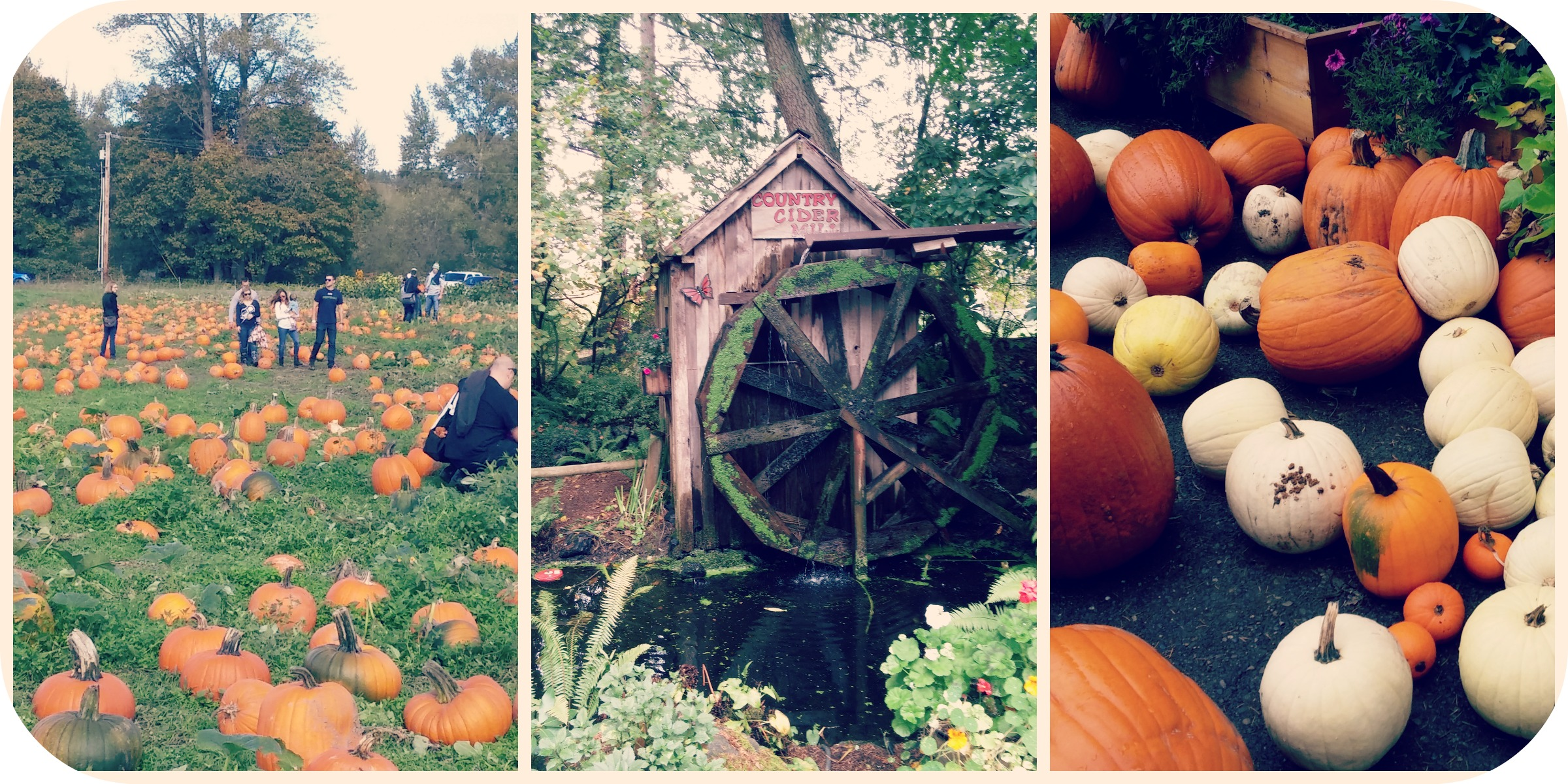 Fall Collage Lattins and Schilter