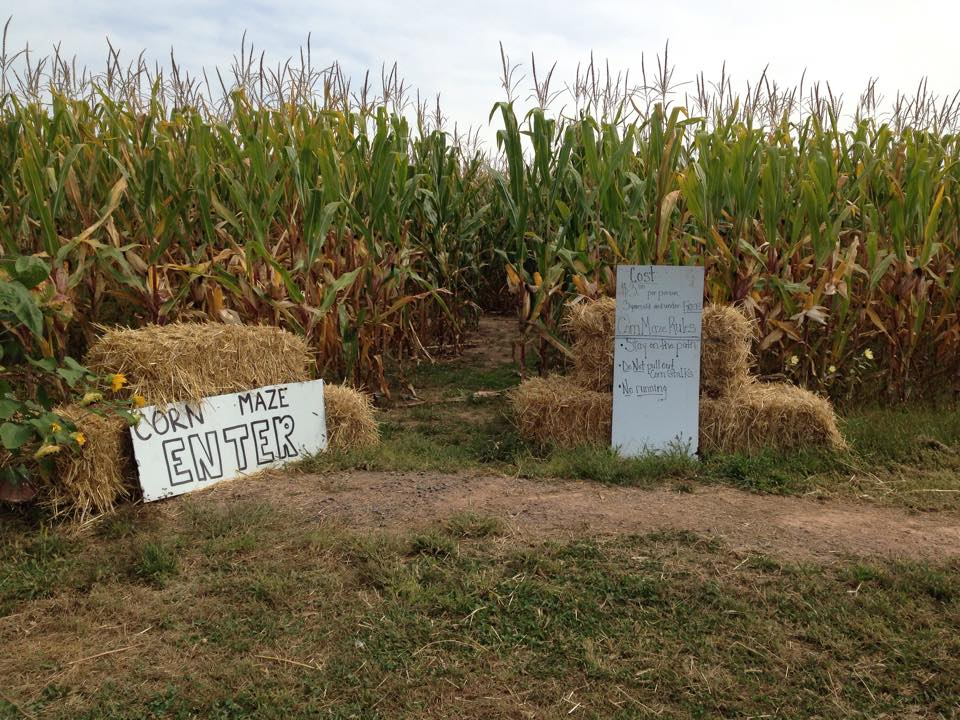 Windy Springs Farm Corn Maze