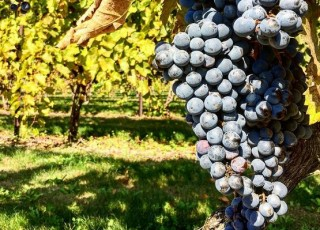 Explore the nine wineries of the Lehigh Valley Wine Trail.