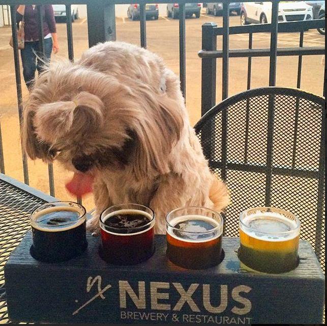 Nexus Restaurant & Brewery, Albuquerque New Mexico