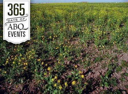 Drought Gardening Strategies - VisitAlbuquerque.org