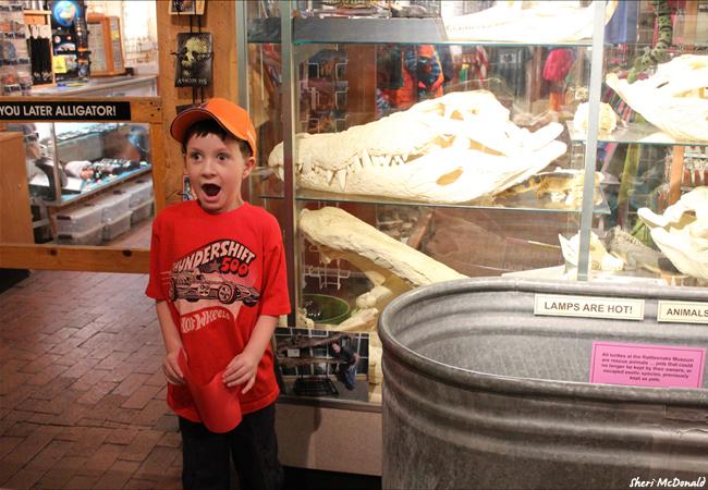 Rattlesnake Museum - Copyright Sheri McDonald