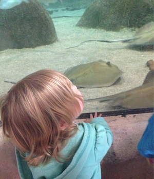 Checking out the stingrays at the ABQ BioPark Aquarium