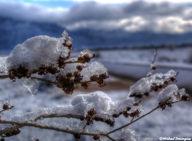 Snowfall in Albuquerque, New Mexico - Michael Dominguez