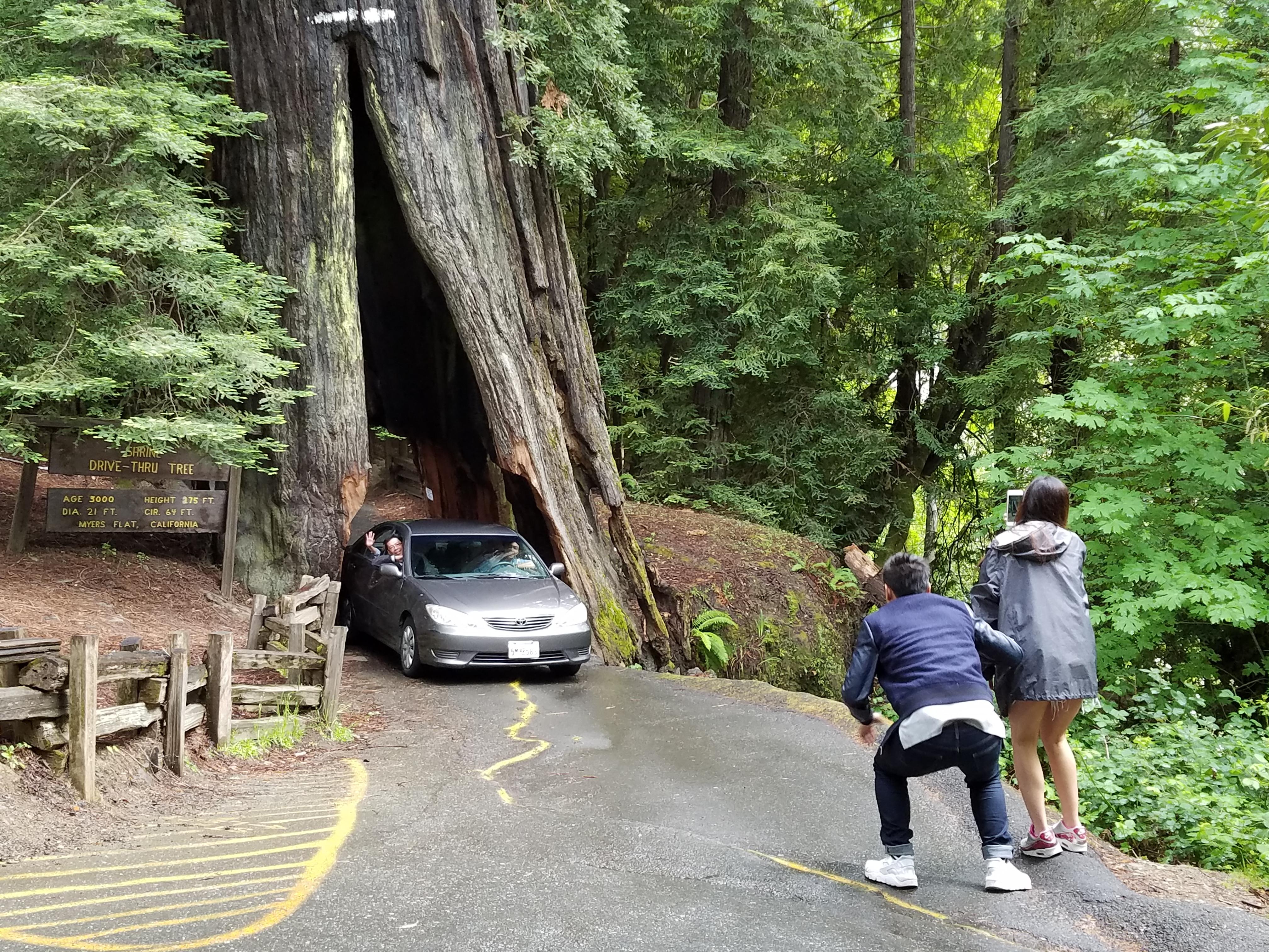 drive through trees