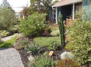 Show Off Your Savvy Landscaping In Roger S Gardens Contest