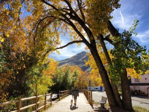 "The ""Golden"" Rule: Take the Kids to See Fall Colors in Denver's"