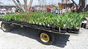 Kal-Bro Farms trailer of perennials