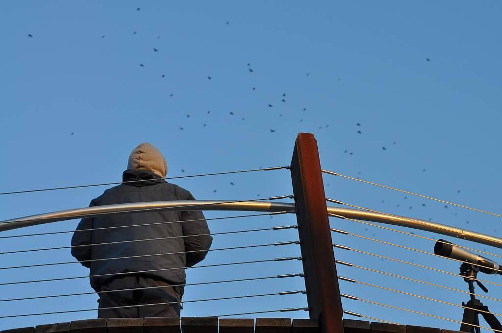 Longshore Birding Platform - Courtesy of Indiana Dunes State Park
