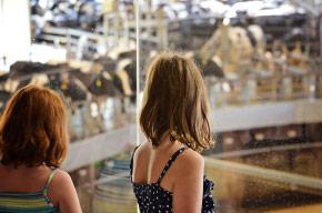 Dairy Adventure at Fair Oaks Farms