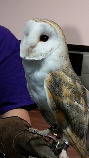 Barn Owl Indiana Dunes Birding Festival