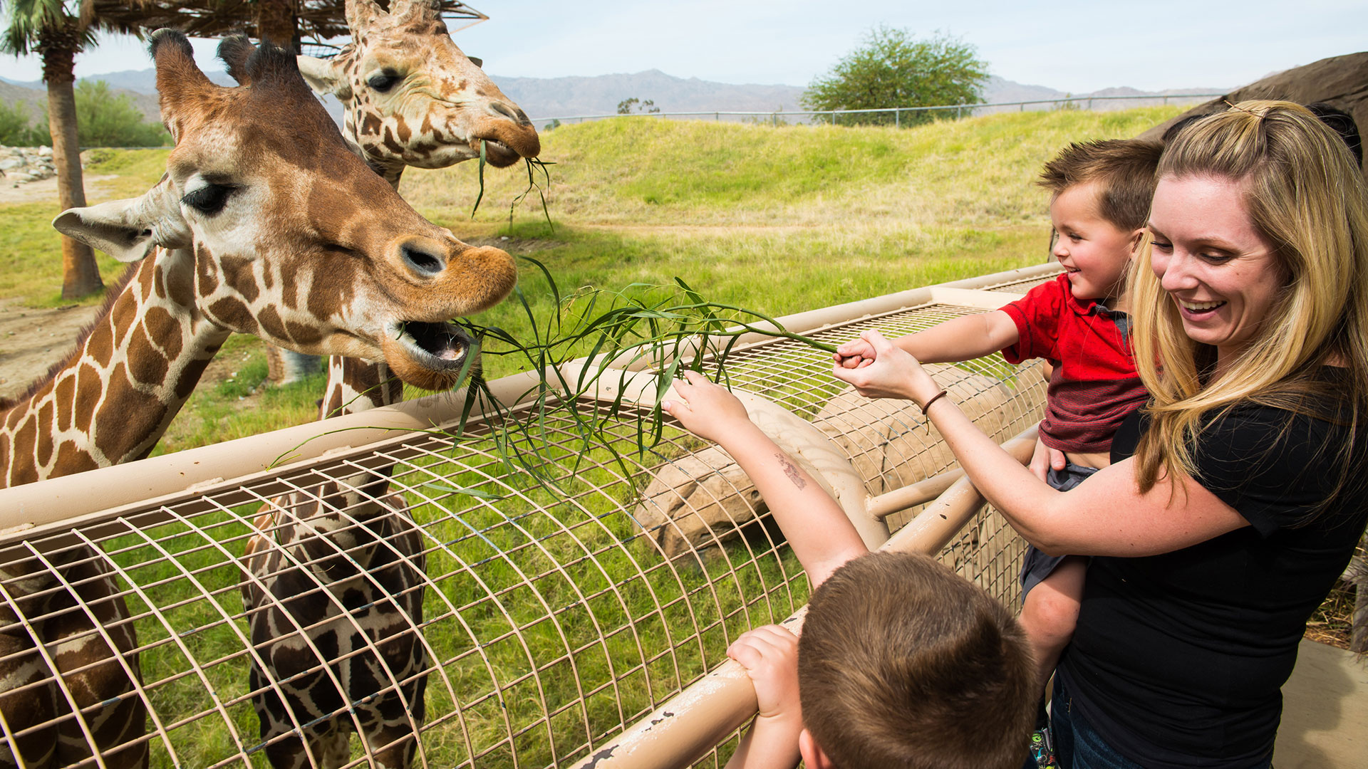 family-friendly fun at the living desert