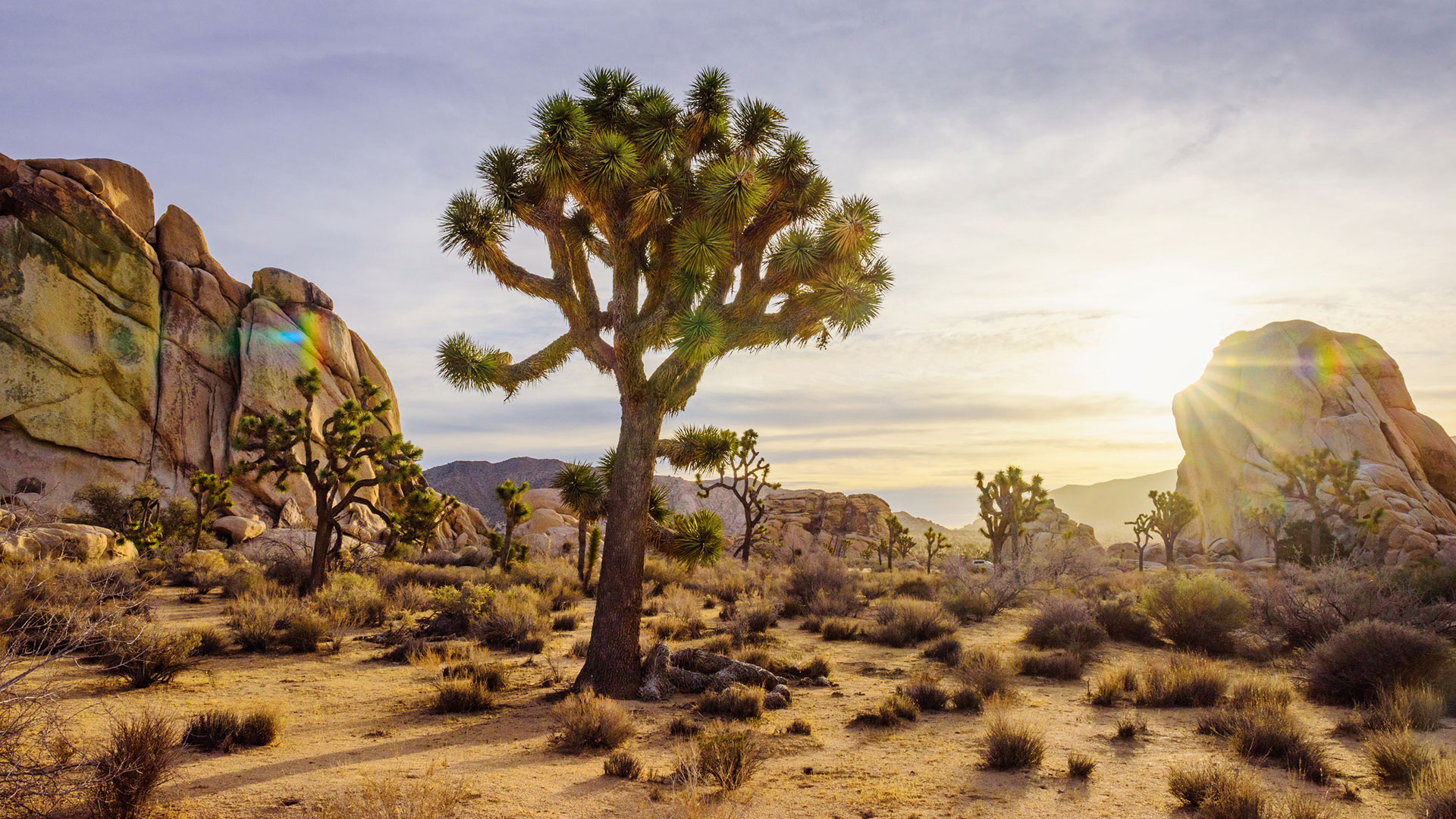 where to eat in joshua tree