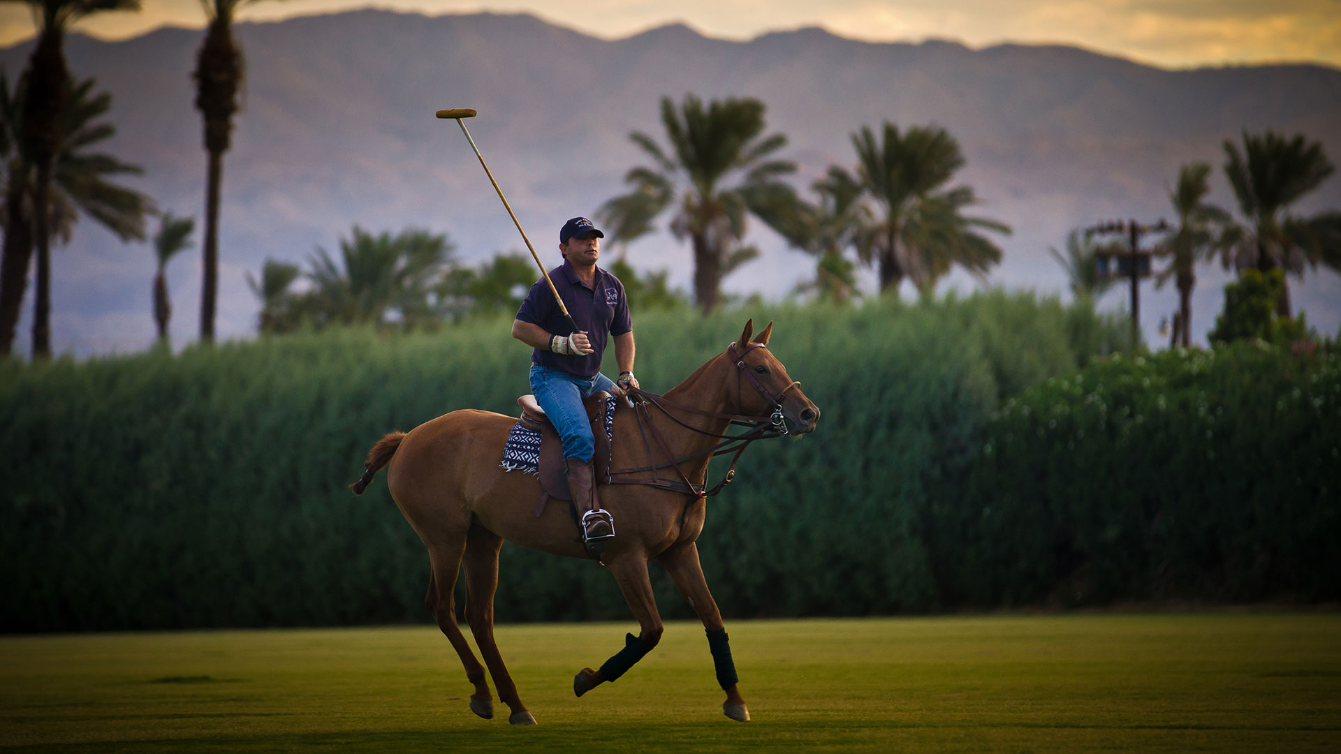 polo in indio