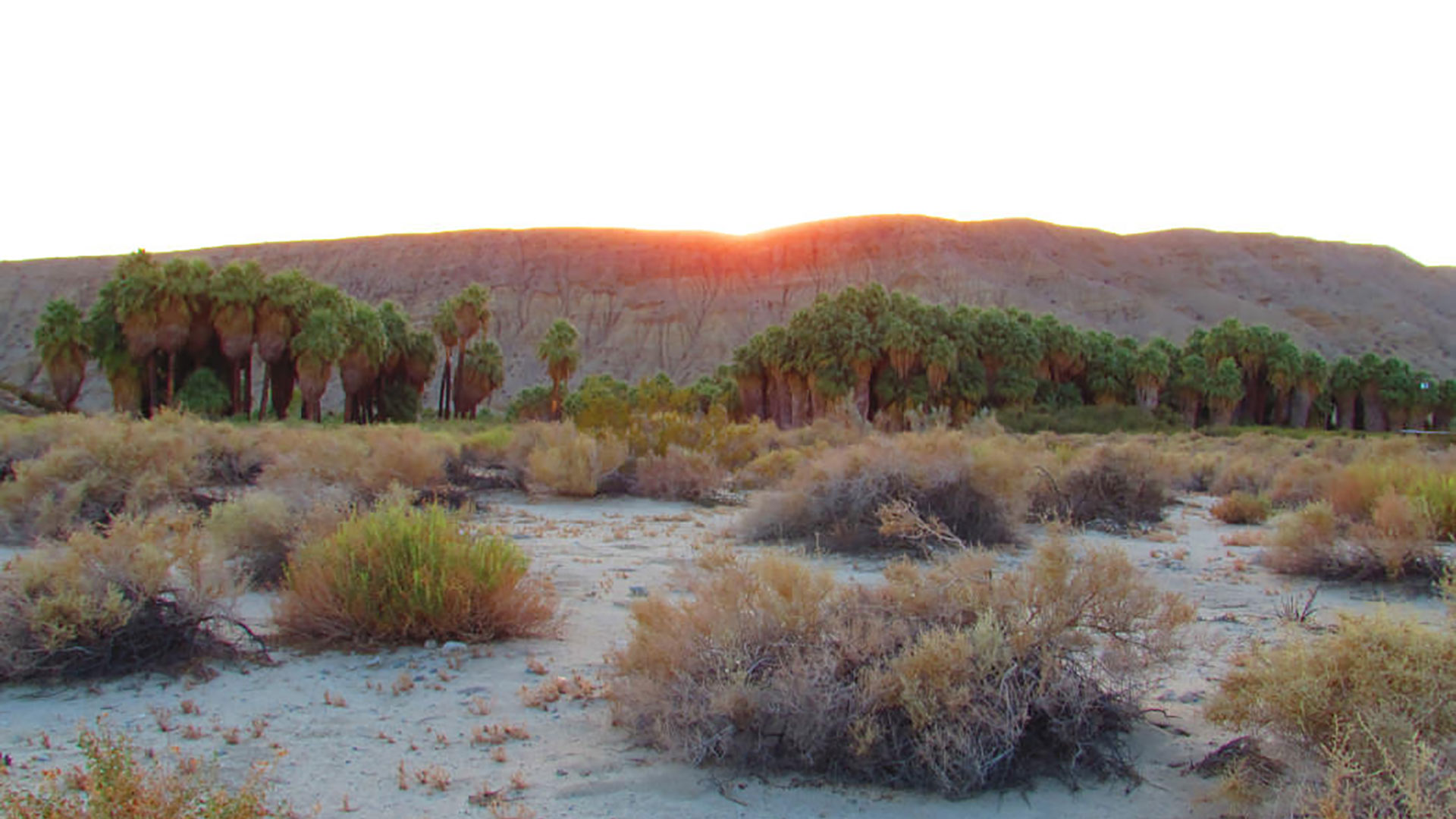 1000 Palms California Map.The Best Oasis Hikes In Greater Palm Springs