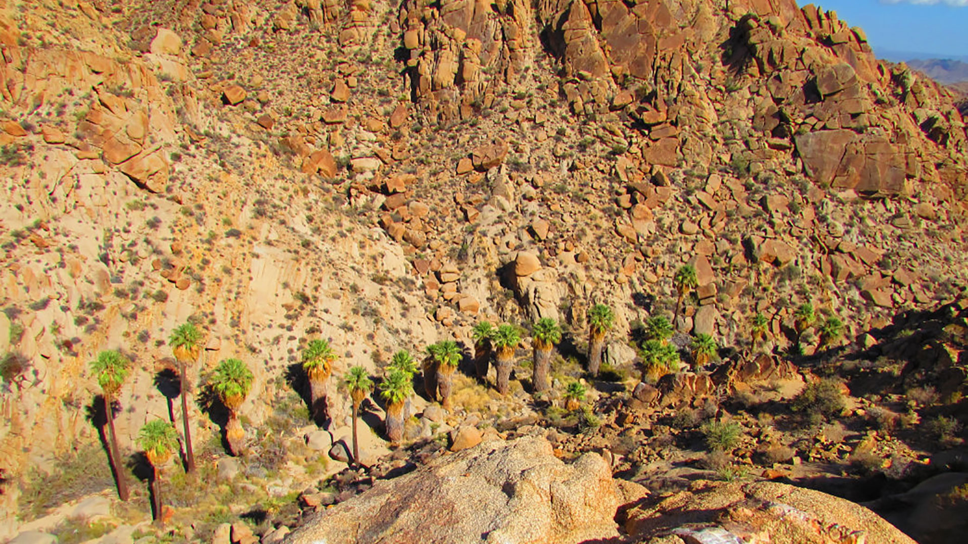 lost palms oasis hike