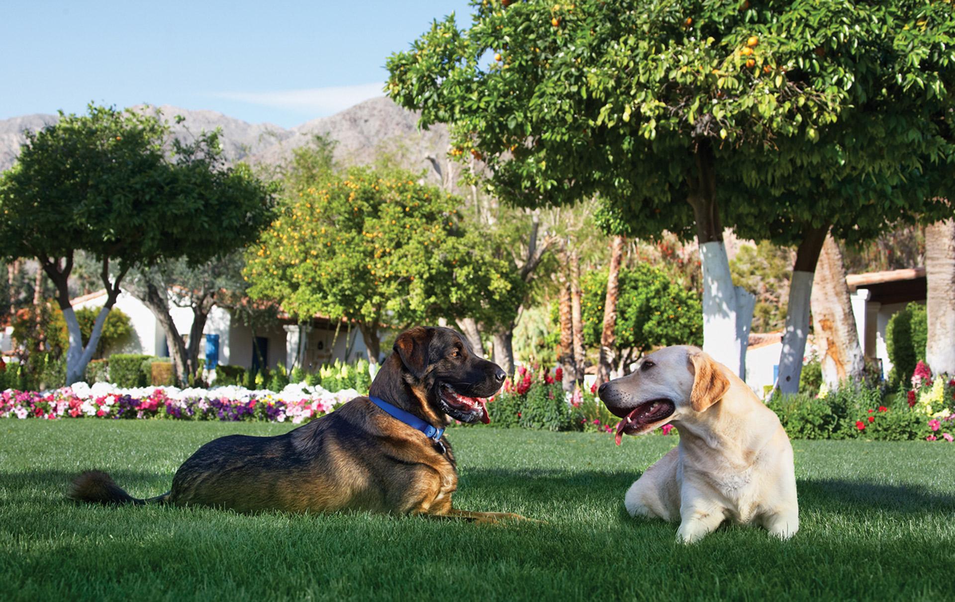 La Quinta Dogs