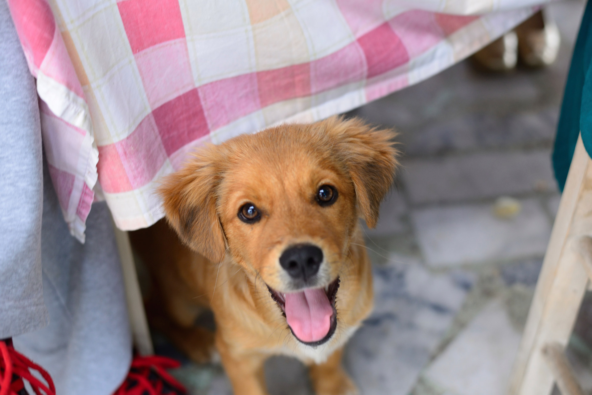 bistro dog