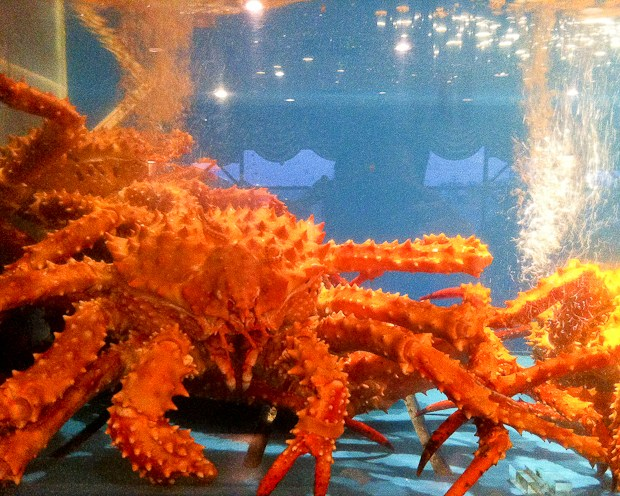 King Crab in Water