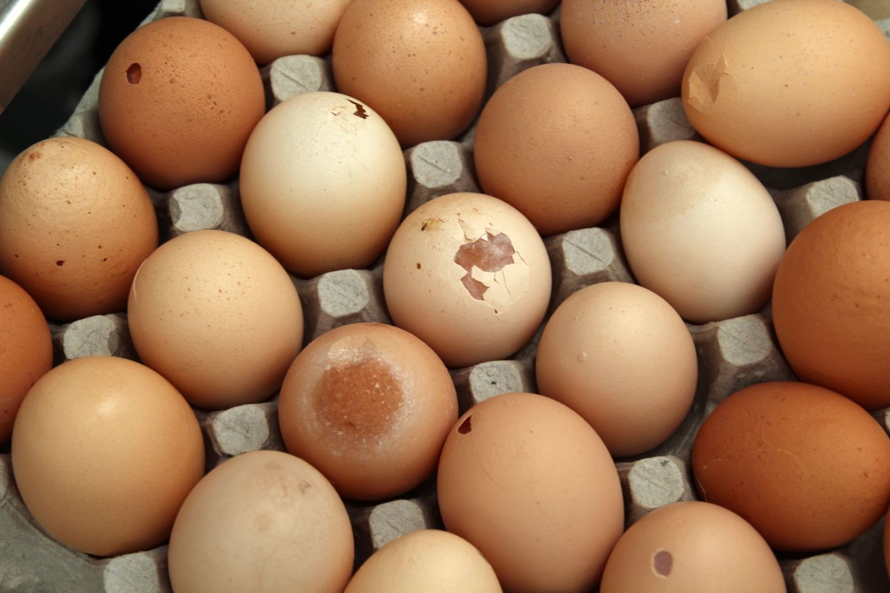 Rabbit River Farms eggs