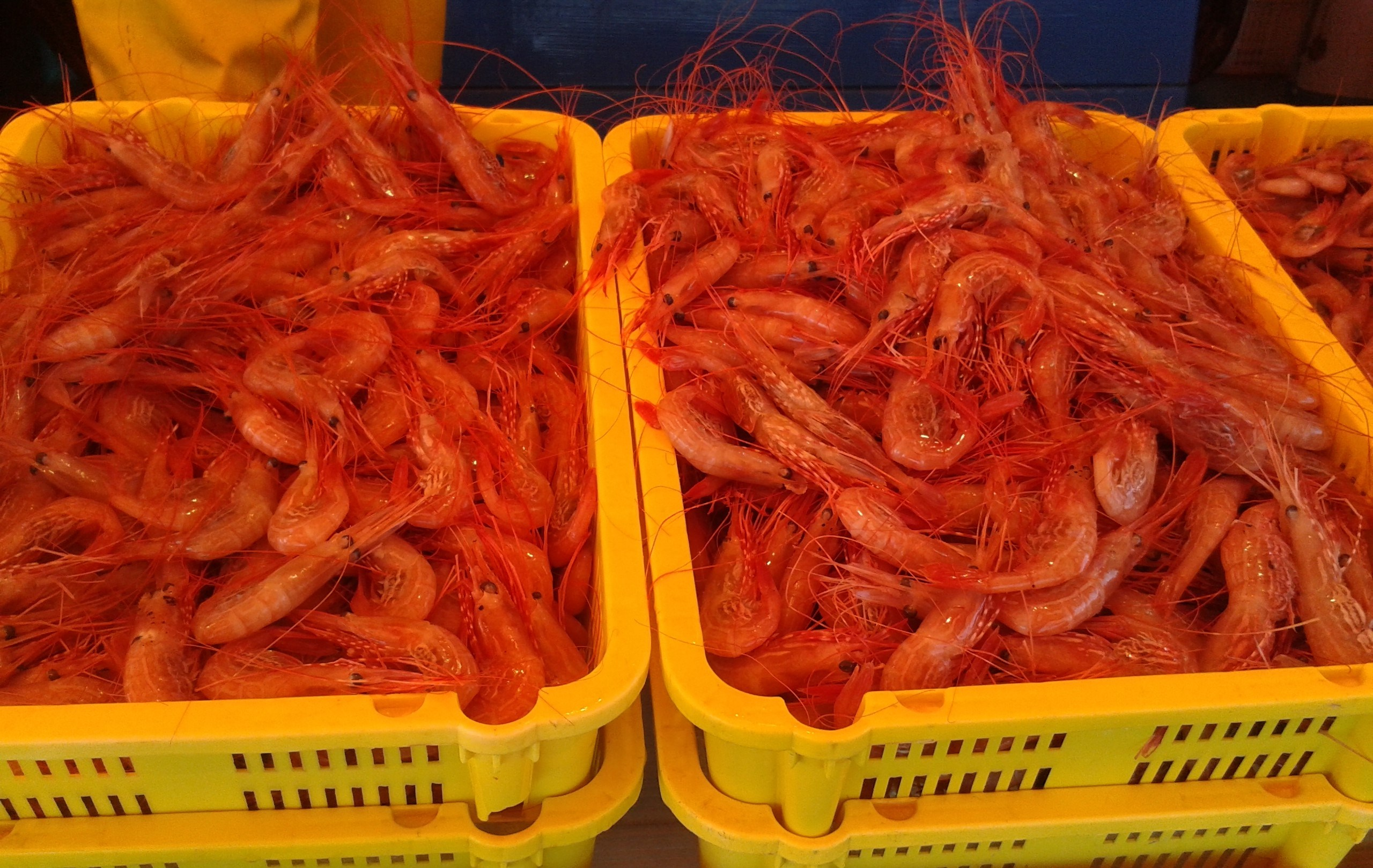 Fresh shrimp - Fisherman's Wharf