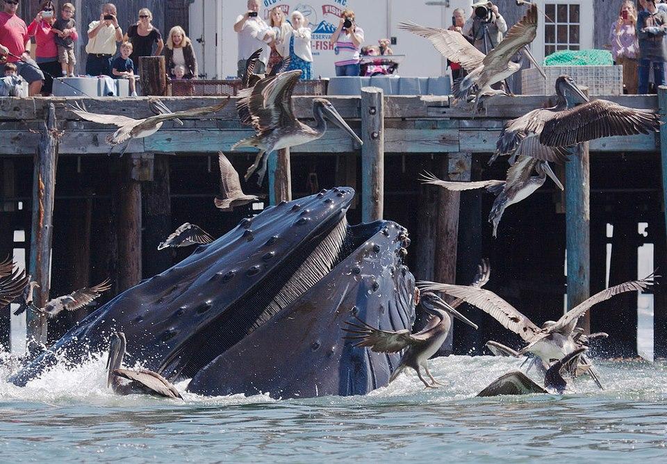 Avila Beach Whales
