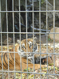 Charles Paddock Zoo in Atascadero California
