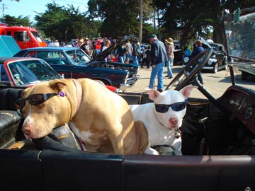 Baywood Park - Oktoberfest - Cool Cat Dogs