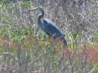 birding san luis obispo county