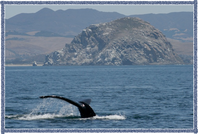 Whale Watching in Morro Bay