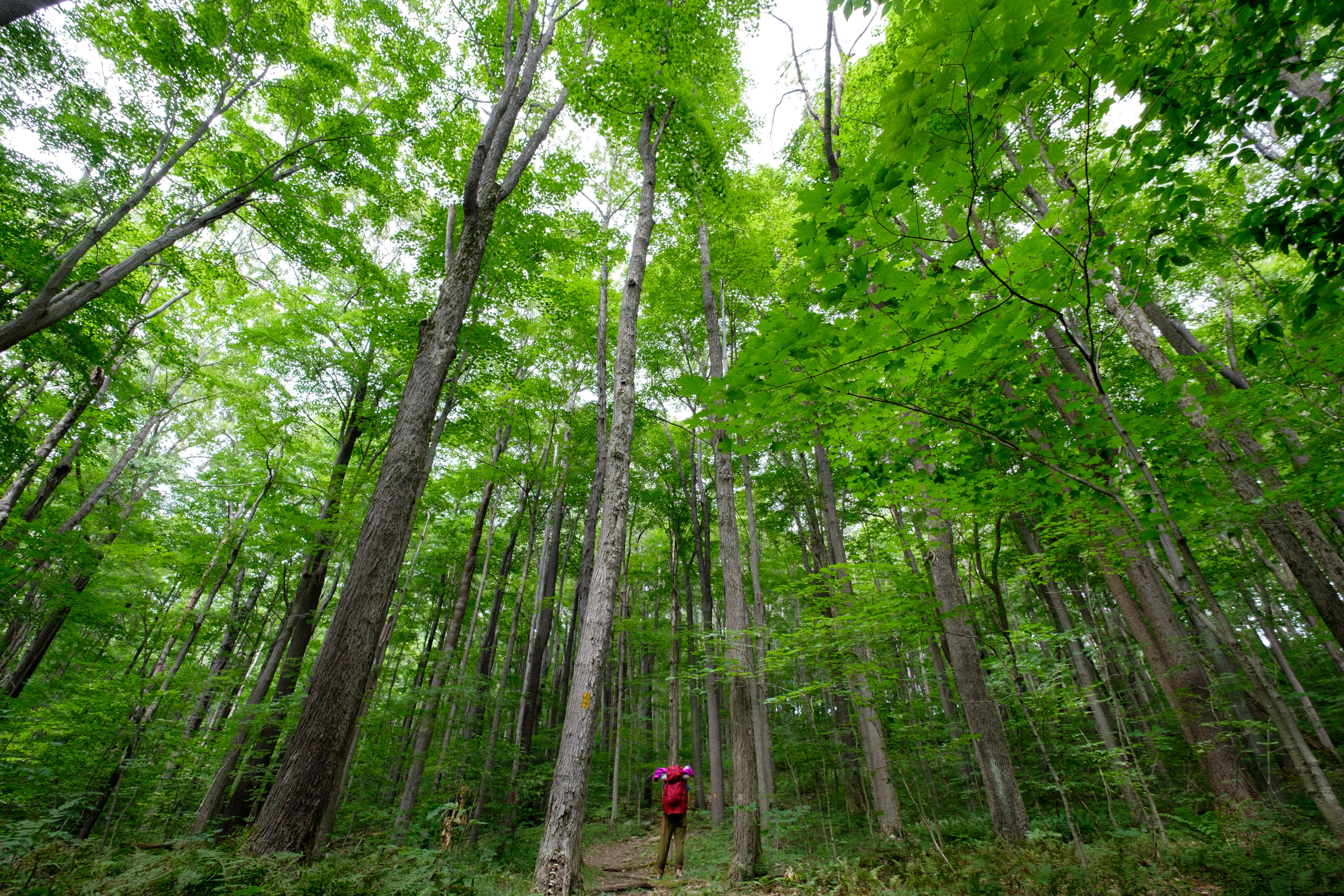 Hiking Trails In Laurel Highlands Tours Map Information