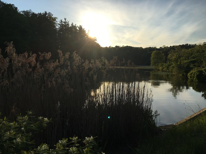 Lake Williams. Photo courtesy of Mark Walters.