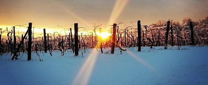 Photo courtesy of Naylor Wine Cellars