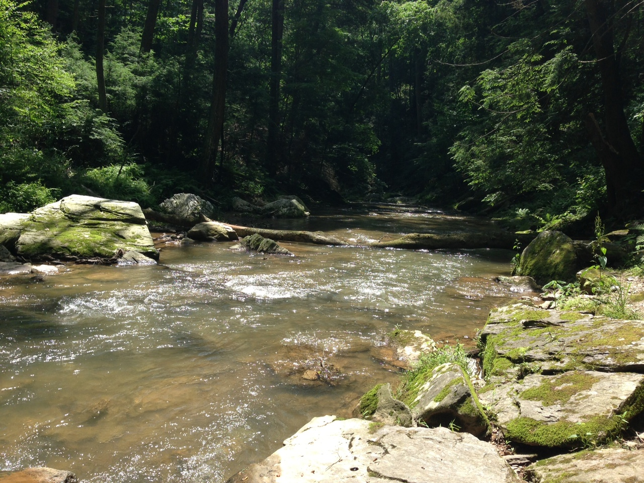 Otter Creek Campground is a scenic escape bordering the Susquehanna River and Otter Creek.