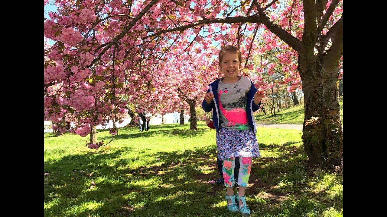 Branch Brook Park Cherry Blossom Festival 2020.2018 Bloomfest At Newark S Cherry Blossom Festival