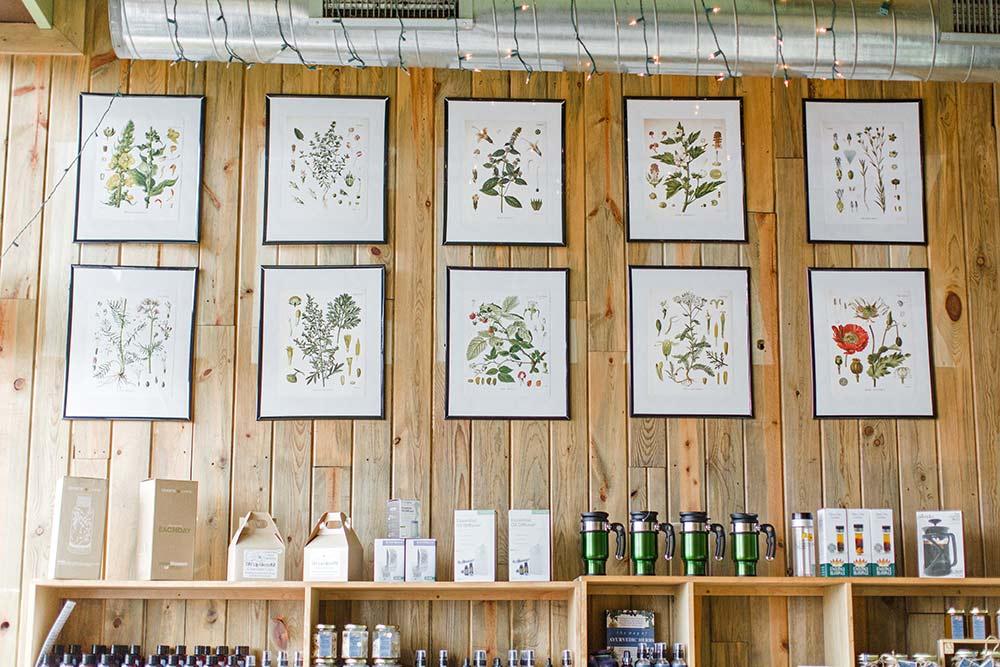 Golden Poppy Wall Prints