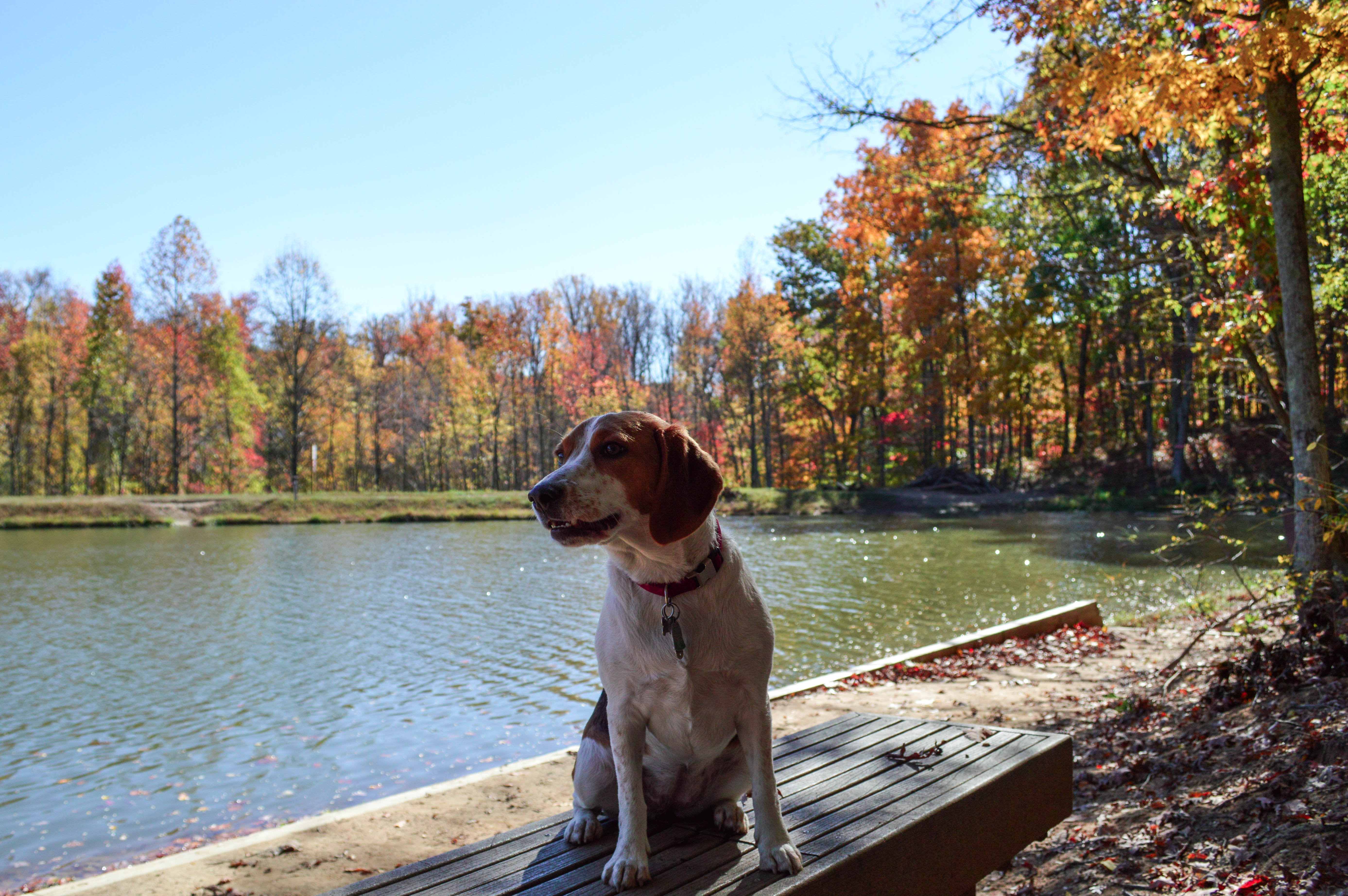 pet-friendly-parks-in-northern-virginia