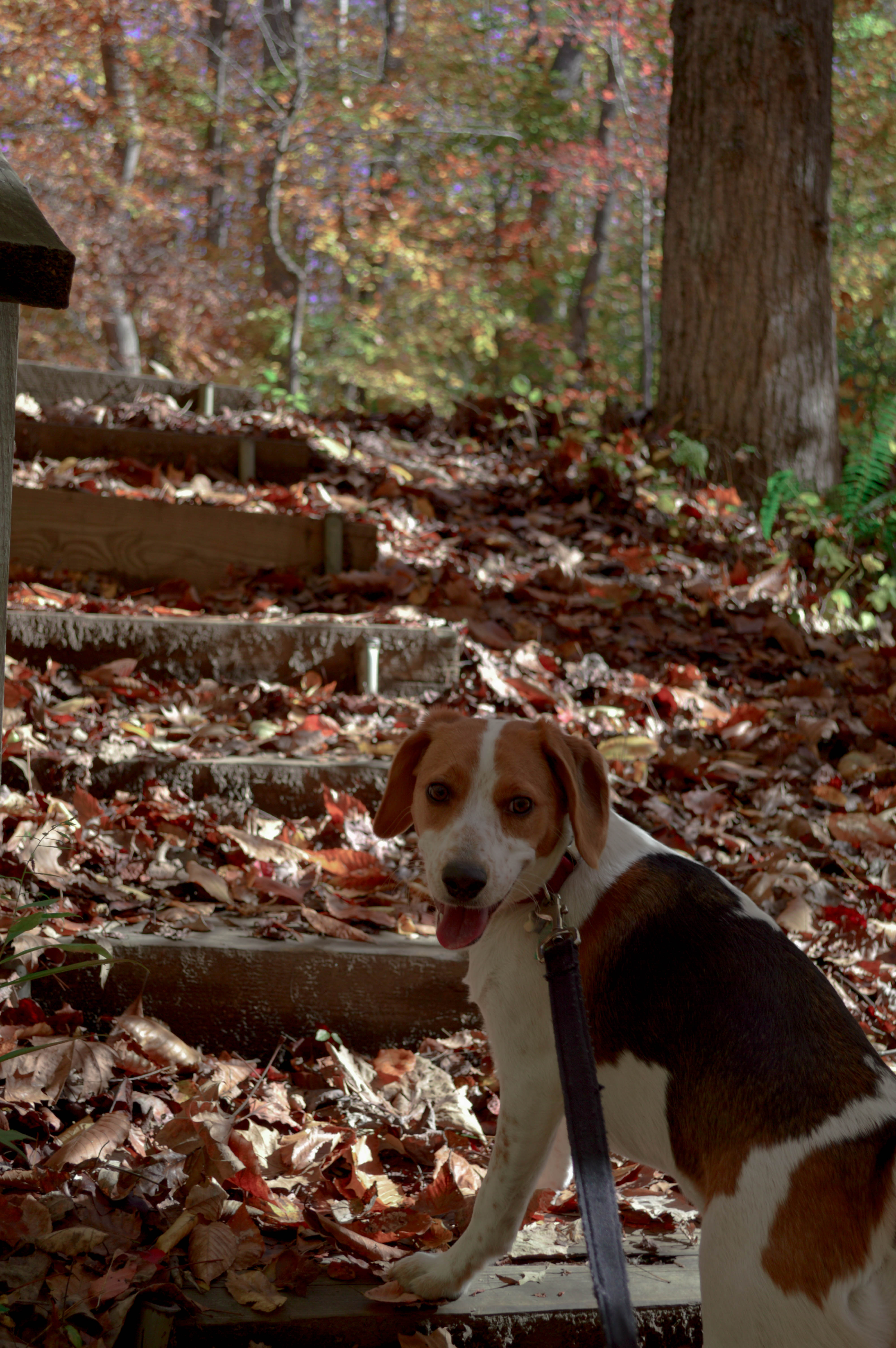 things-to-do-with-a-dog-virginia