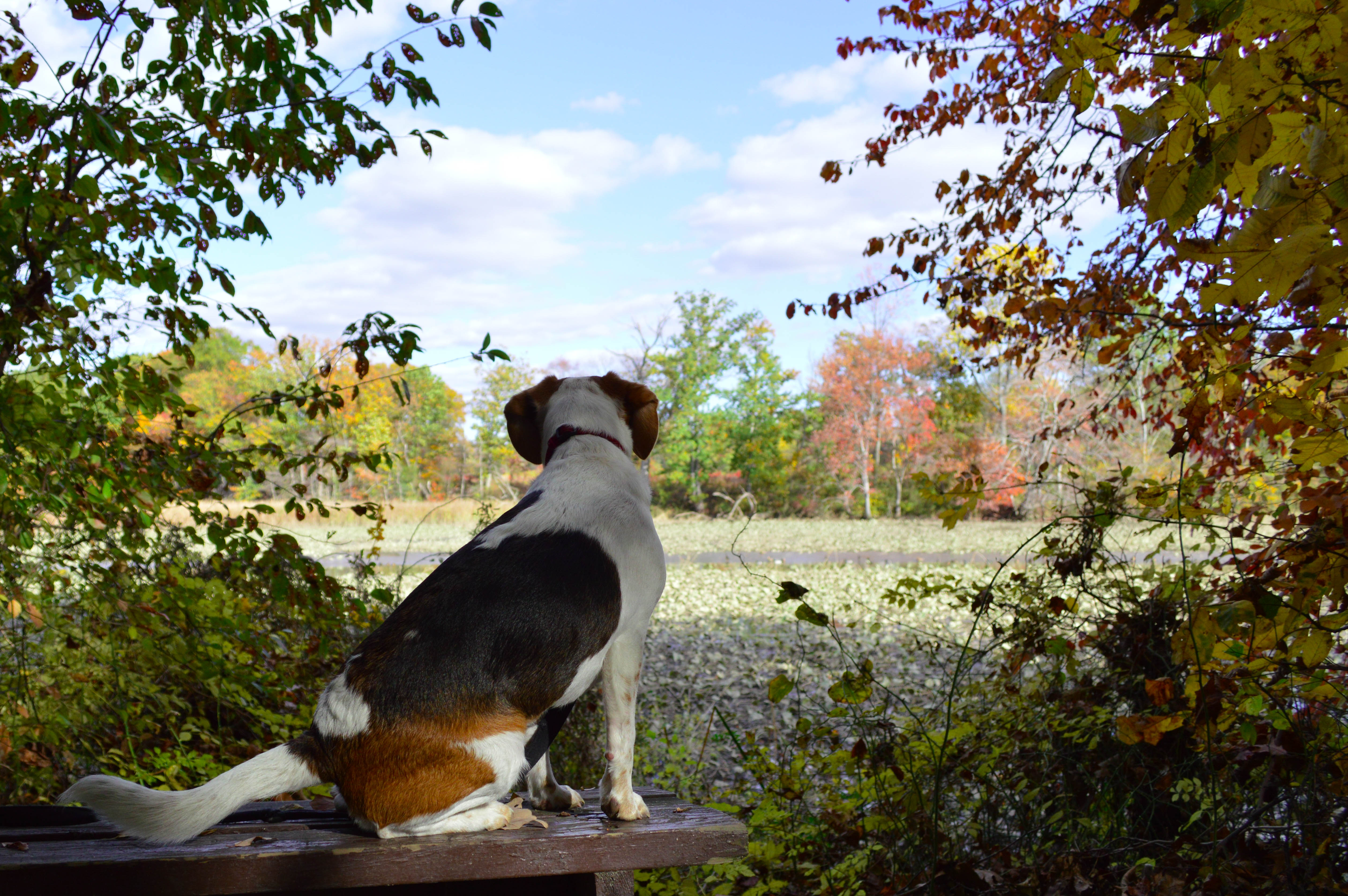 veterans-state-park-is-dog-friendly
