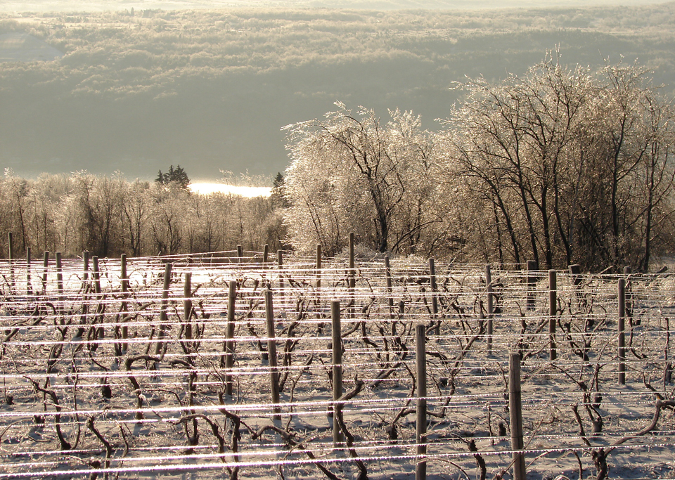 Winter Vineyard and Lake View courtesy of Jake Cornelius