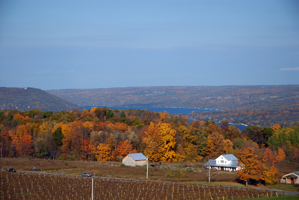 View from Heron Hill During 2014 Harvest