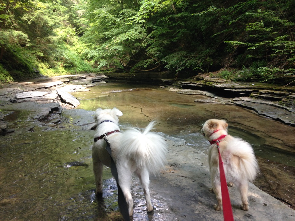 Baxter and Kosar on the Gorge Trail