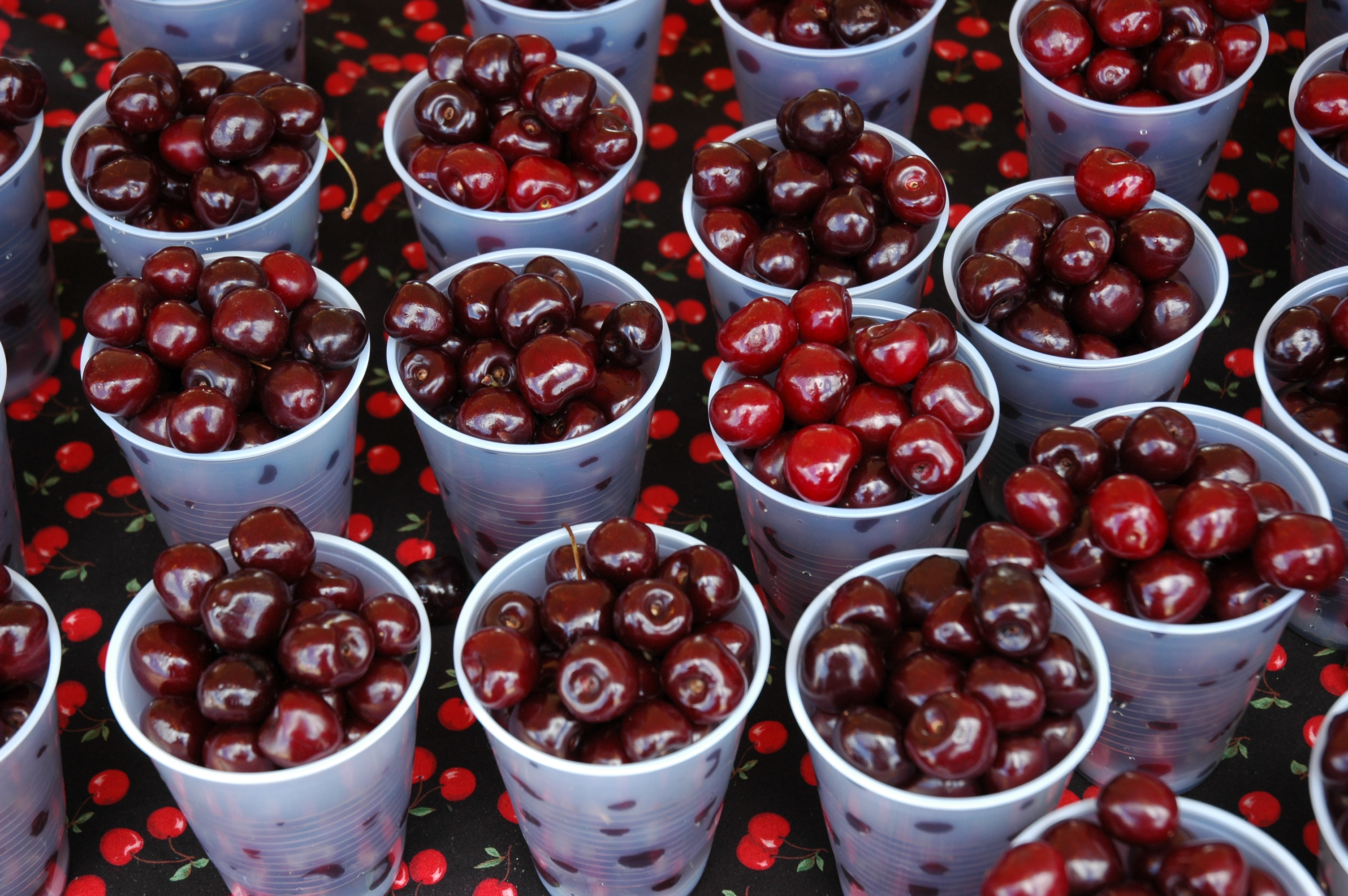 Traverse City National Cherry Festival | Food, Music & Events