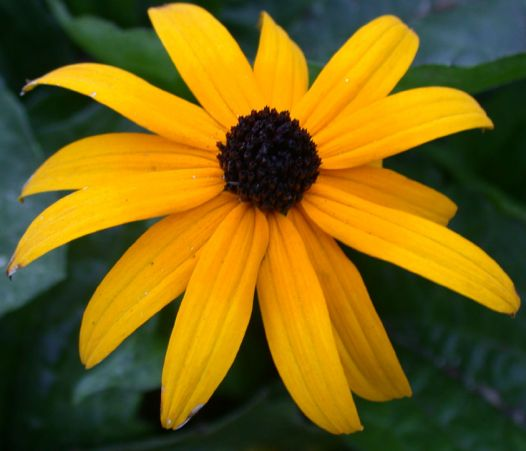 blackeyesusan_event